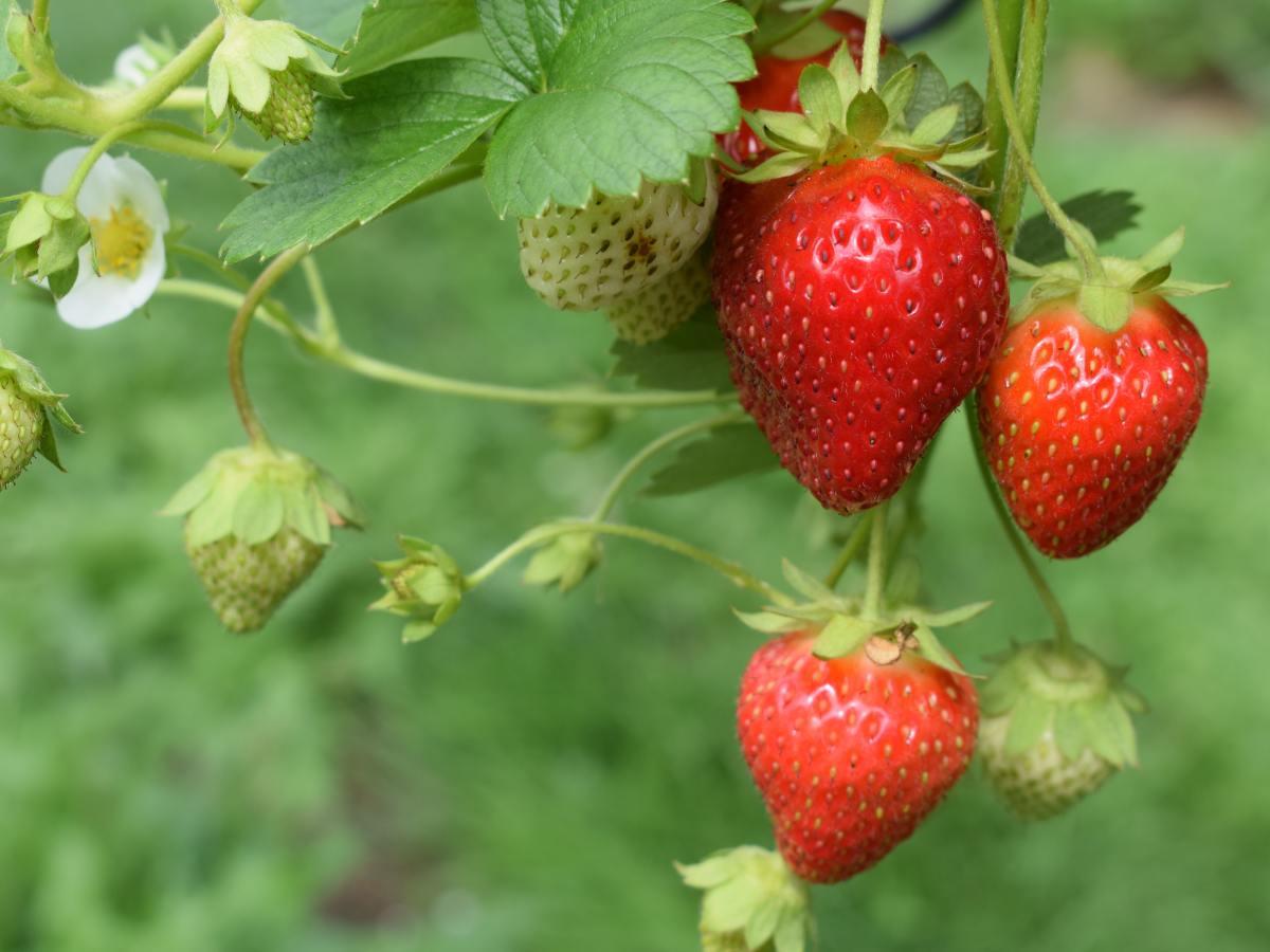 Norvergence - Organic Garden (4)